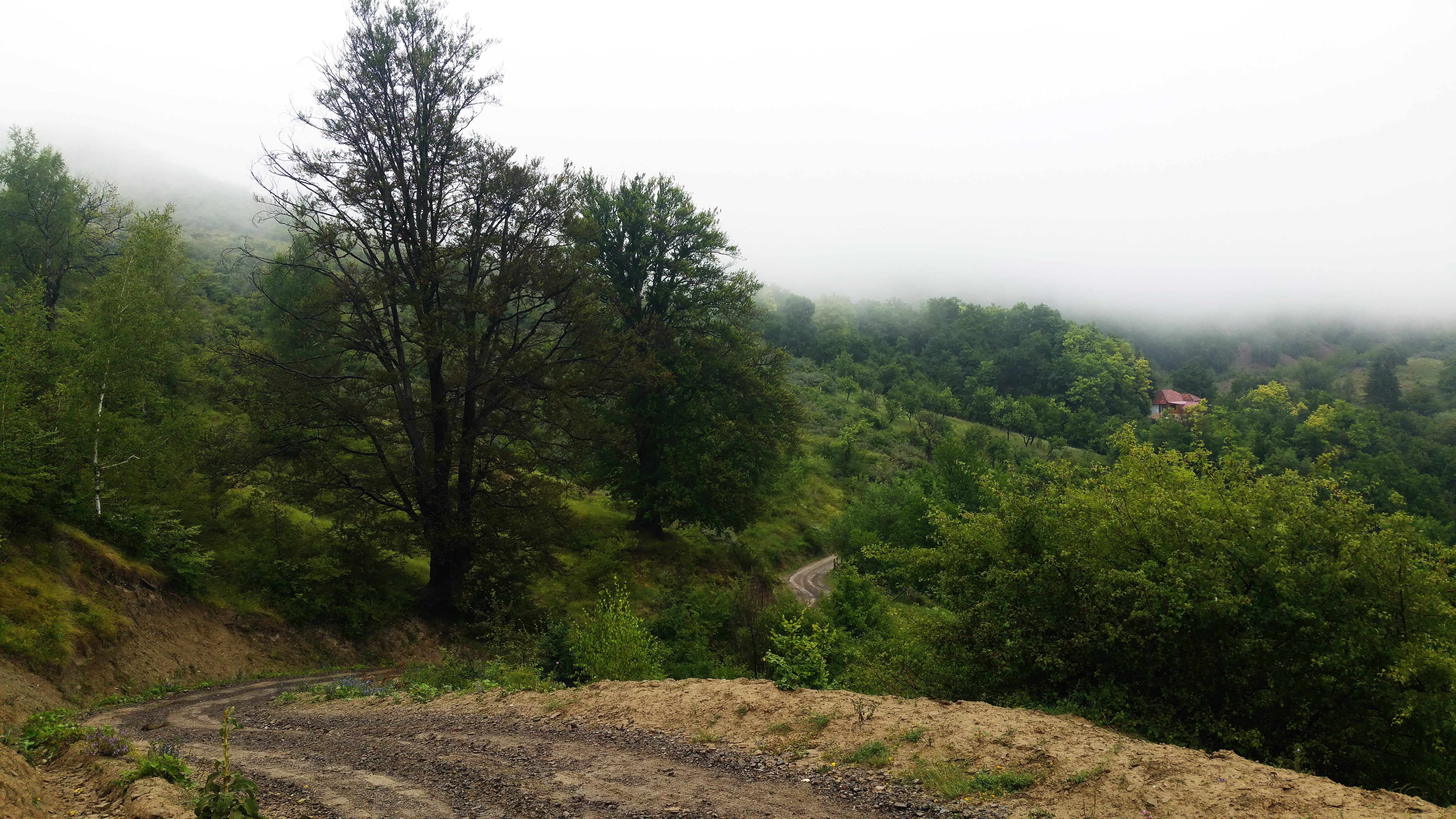 Drum Aluniş - Fişici