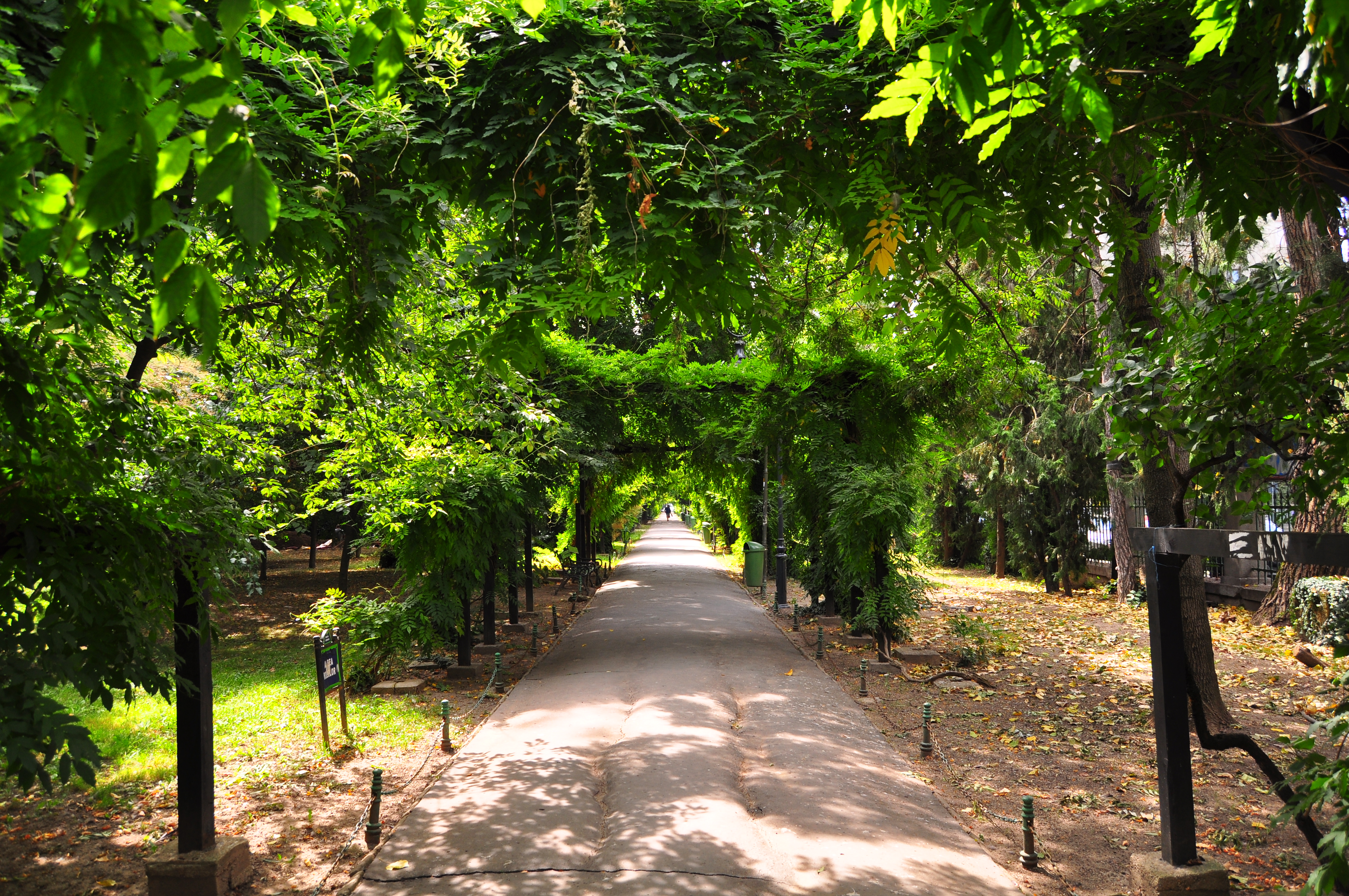 Parcul Cişmigiu