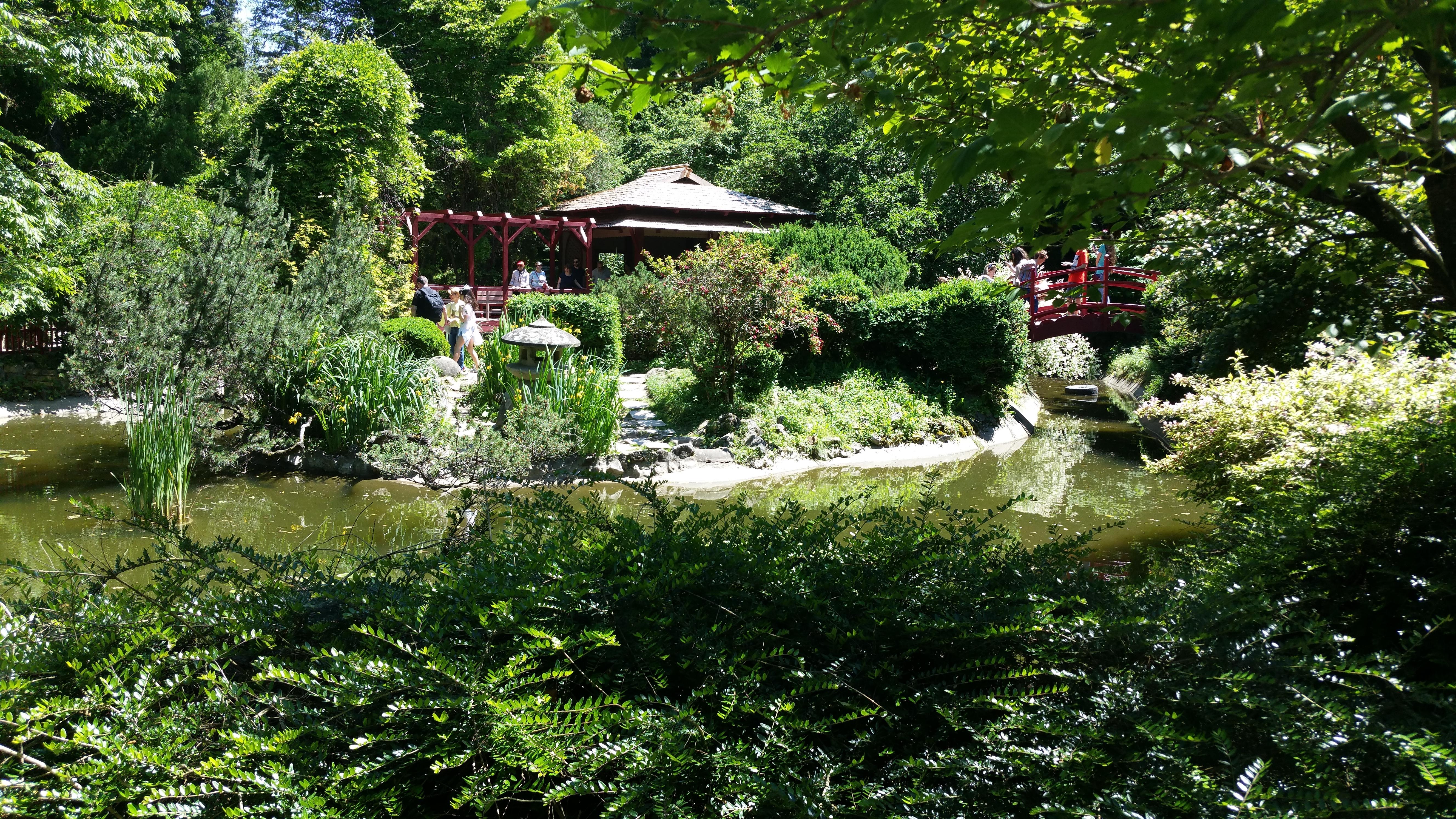 Grădina japoneză. Grădina Botanică. Cluj.